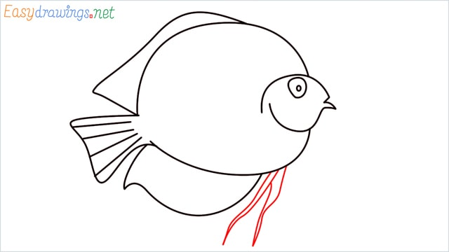 How to draw a Discus Fish step (8)