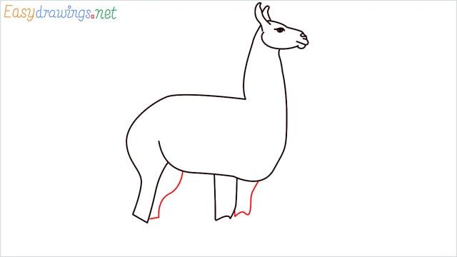 How to draw a Llama step (8)