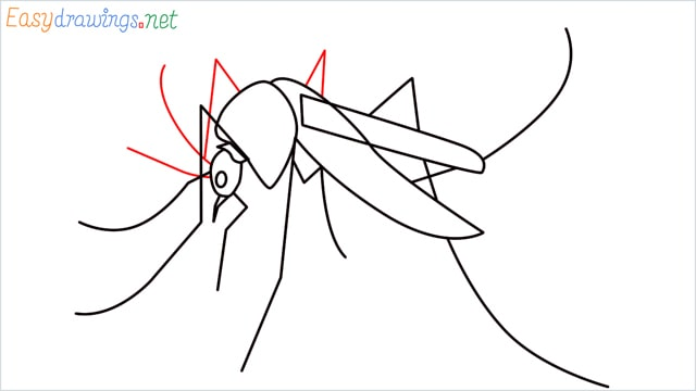 How to draw a Mosquito step (8)