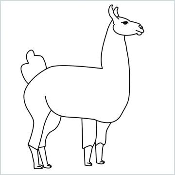 Llama drawing
