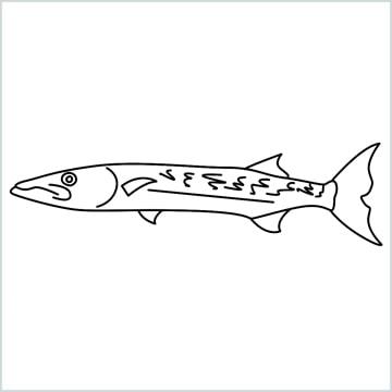 baracuda fish drawing