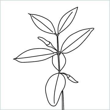 chilli tree drawing
