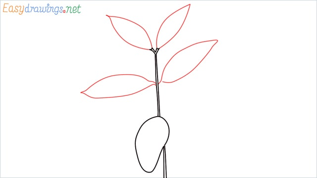 how to draw a chilli tree step (4)