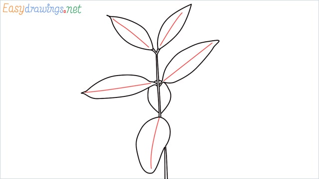 how to draw a chilli tree step (6)