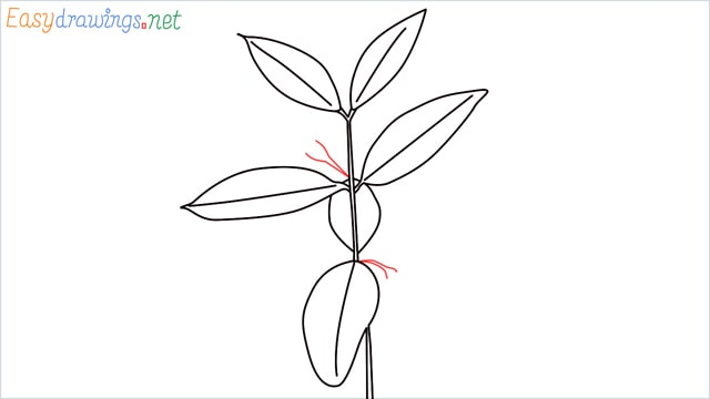 how to draw a chilli tree step (7)