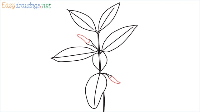 how to draw a chilli tree step (8)