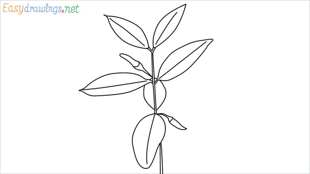 how to draw a chilli tree step by step