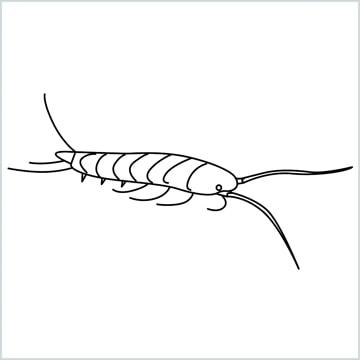silverfish drawing