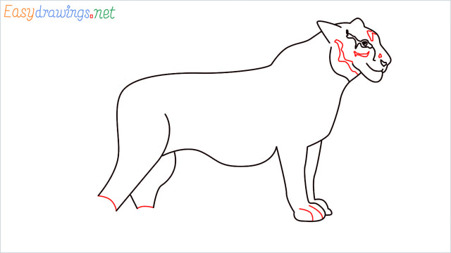 How to draw a Tiger step (11)