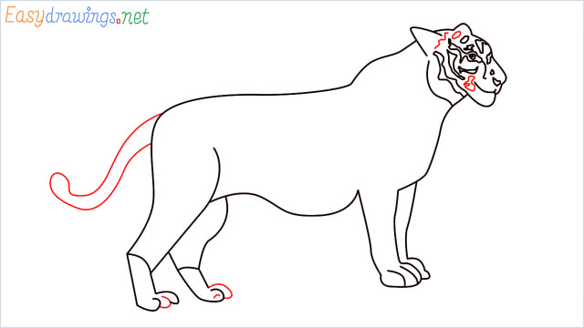 How to draw a Tiger step (13)