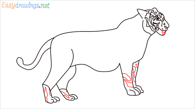 How to draw a Tiger step (14)