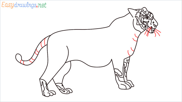 How to draw a Tiger step (15)