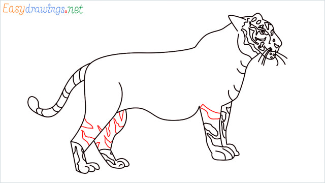 How to draw a Tiger step (16)