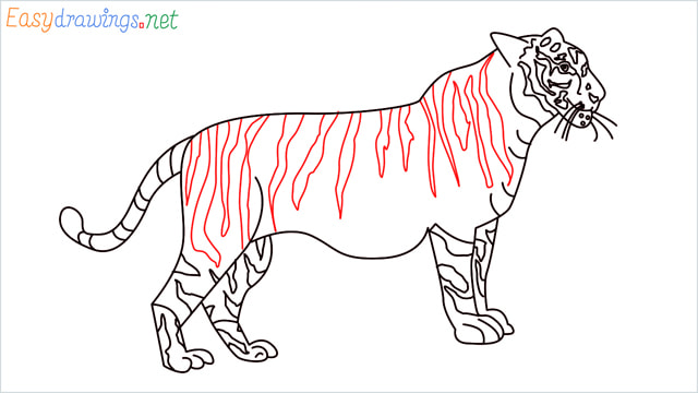 How to draw a Tiger step (17)