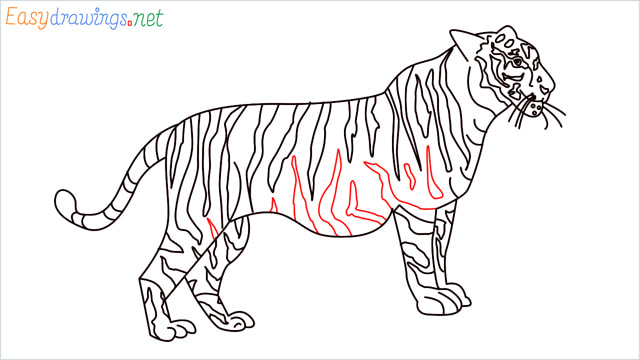 How to draw a Tiger step (18)