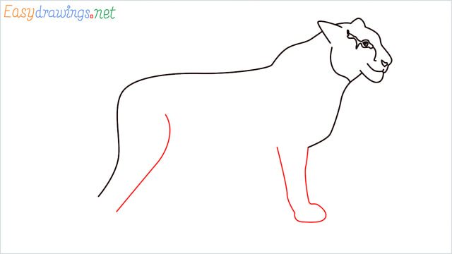How to draw a Tiger step (8)