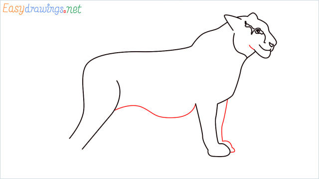 How to draw a Tiger step (9)