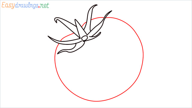 How to draw a Tomato step (5)