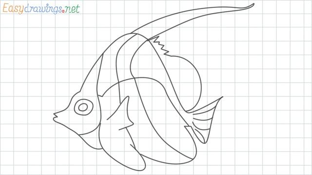 Angelfish grid line drawing