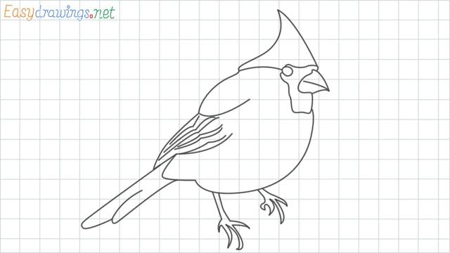 Cardinal bird grid line drawing