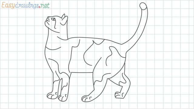 Cat grid line drawing example 1