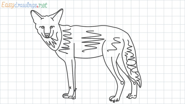 Coyote grid line drawing