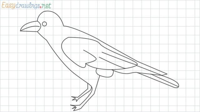 Crow grid line drawing