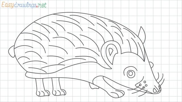 Hedgehog grid line drawing