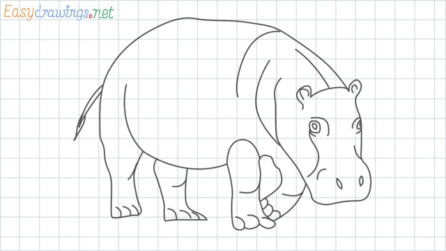 Hippo grid line drawing
