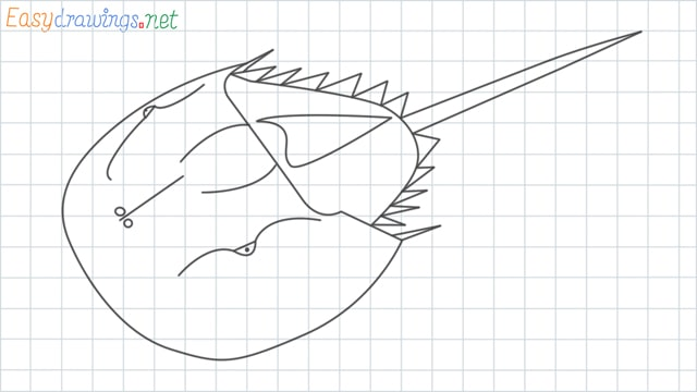 Horseshoe crab grid line drawing