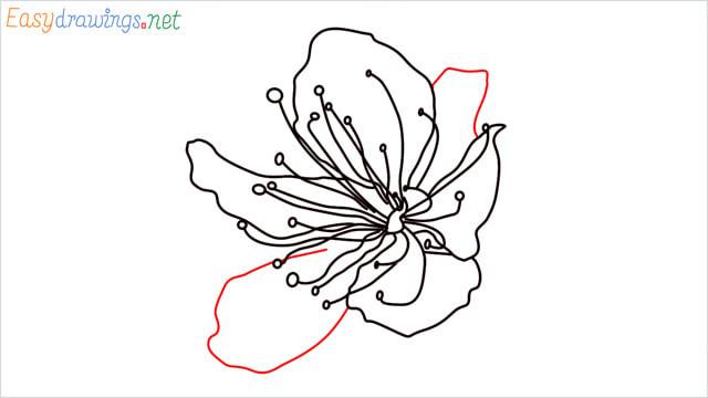 How to draw a Cherry Blossom Flower step (6)