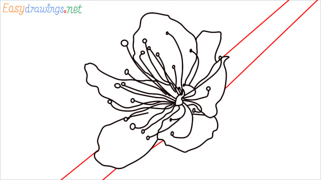 How to draw a Cherry Blossom Flower step (7)
