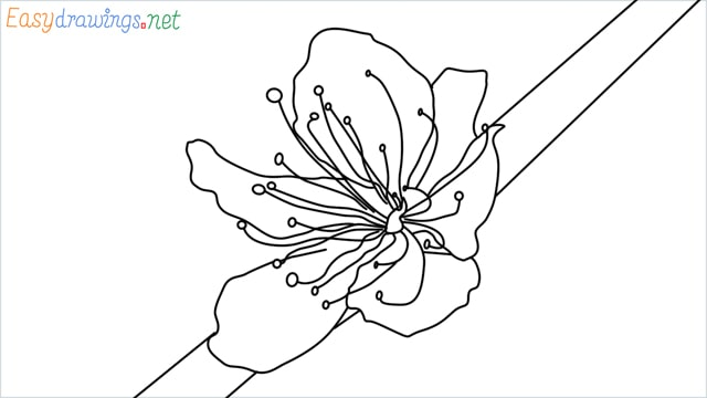 How to draw a Cherry Blossom Flower step by step