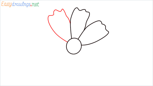 How to draw a Marigold flower step (4)
