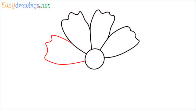 How to draw a Marigold flower step (5)