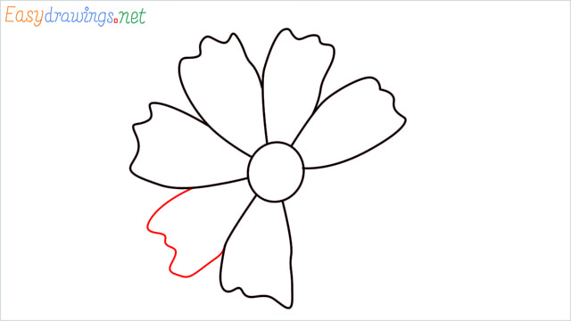How to draw a Marigold flower step (7)