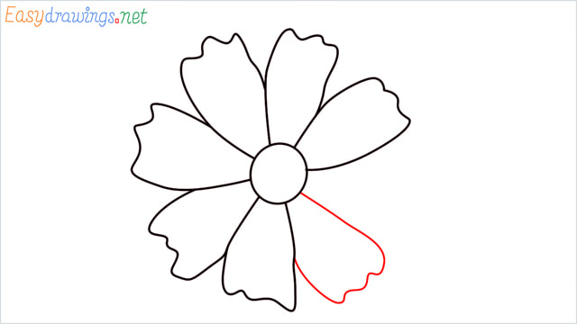How to draw a Marigold flower step (8)