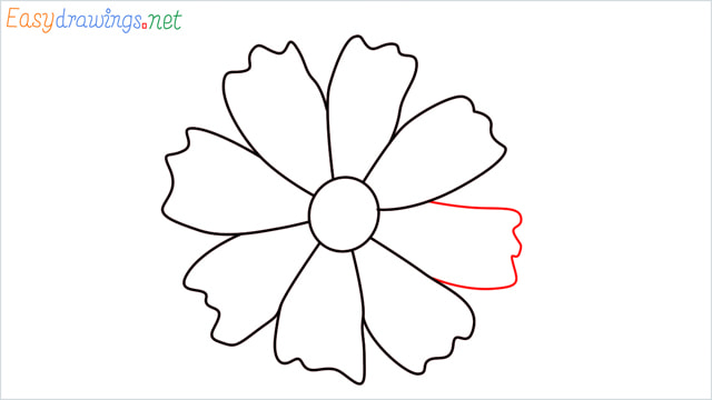 How to draw a Marigold flower step (9)
