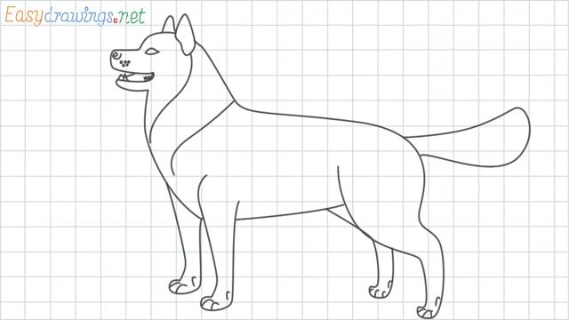 Husky grid line drawing