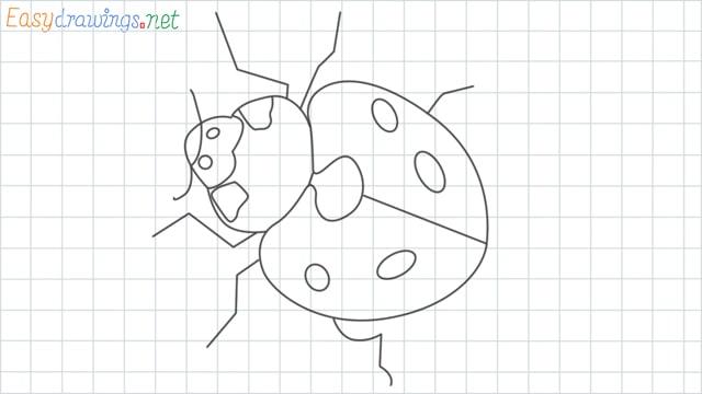 Ladybug grid line drawing