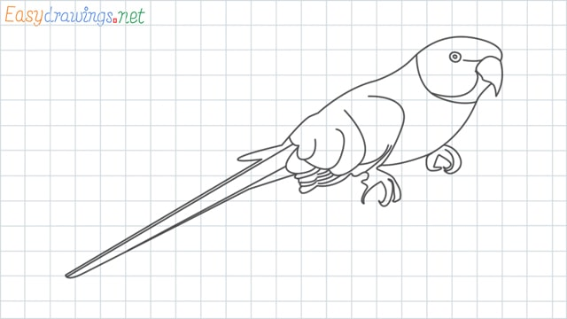 Parrot grid line drawing