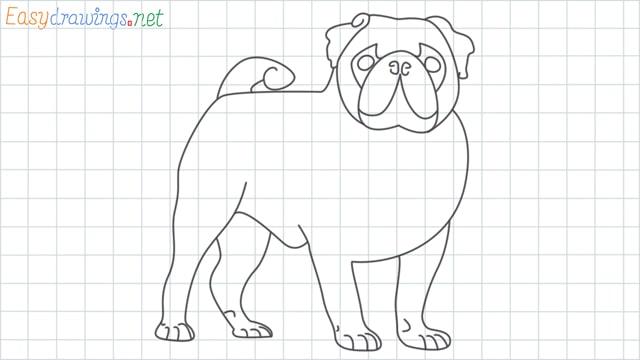 Pug grid line drawing