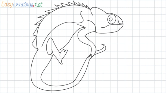 Reptile grid line drawing