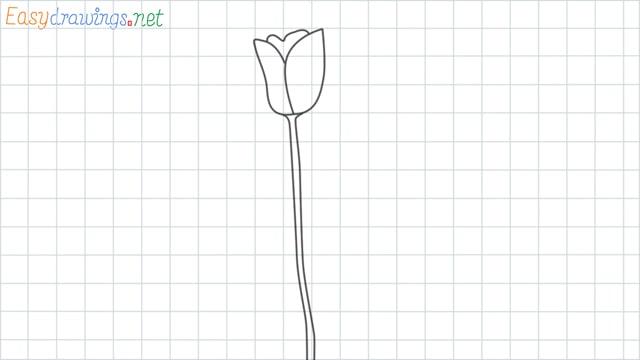 Tulip flower grid line drawing