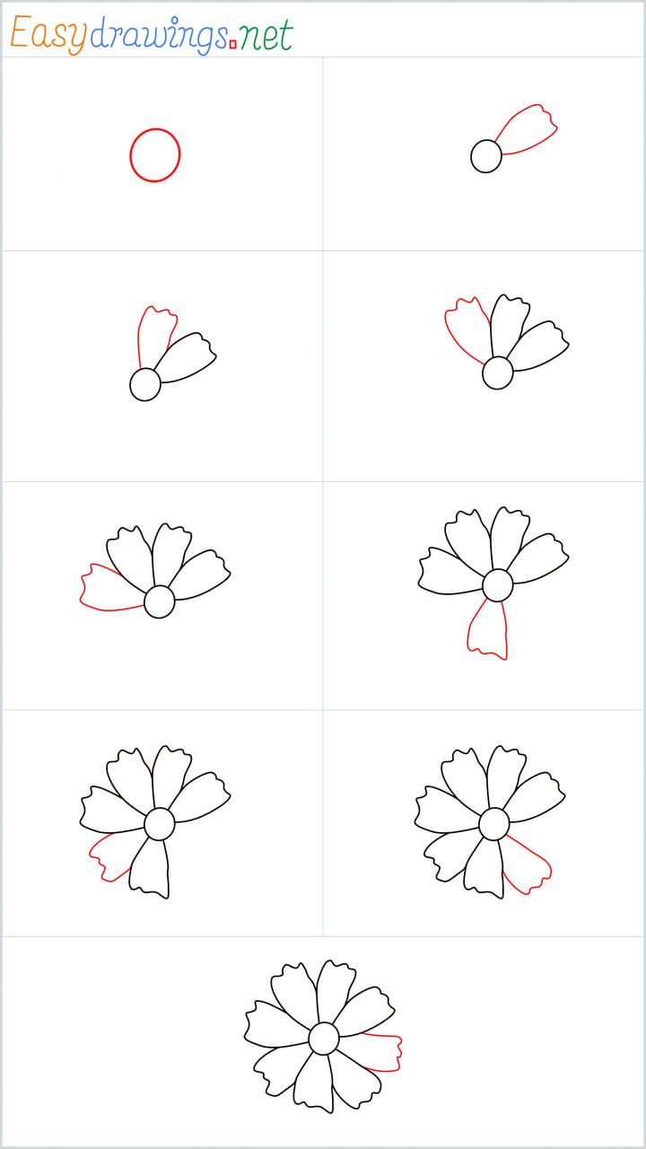 all in one steps for Marigold drawing