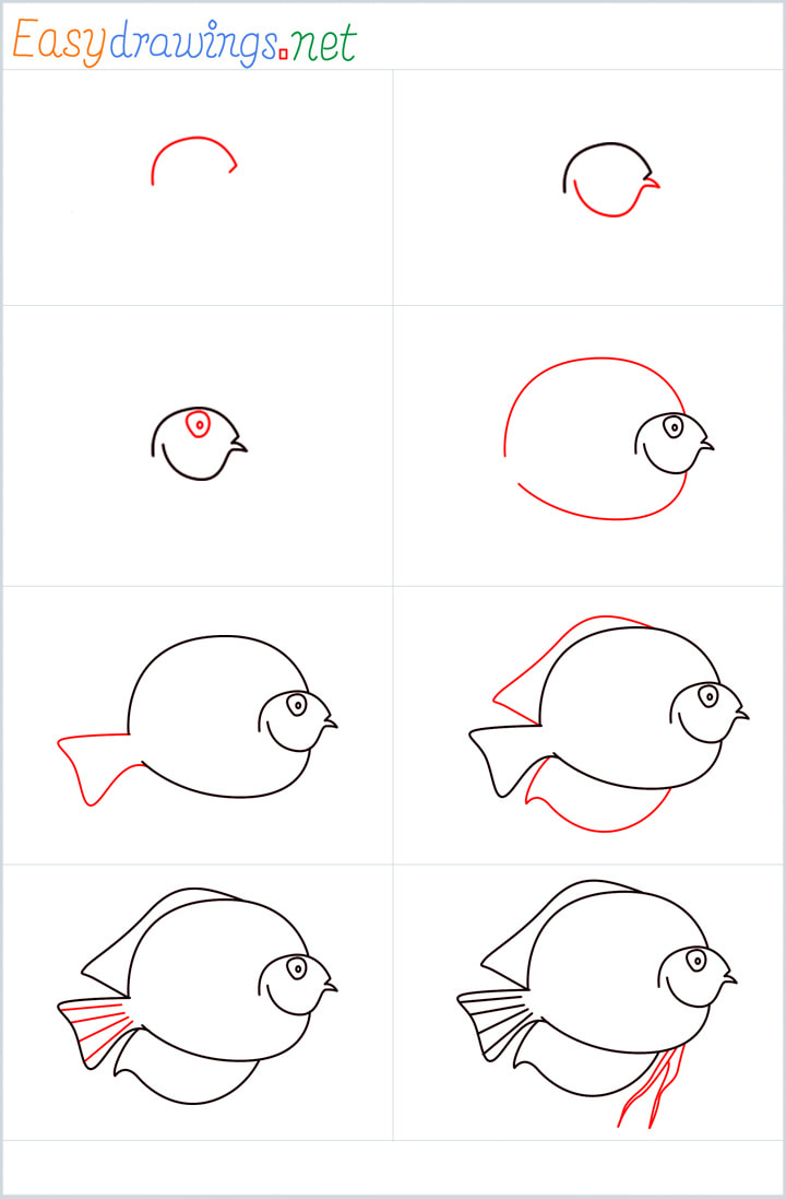 all reference outline drawing in one place for Discus Fish drawing tutorial