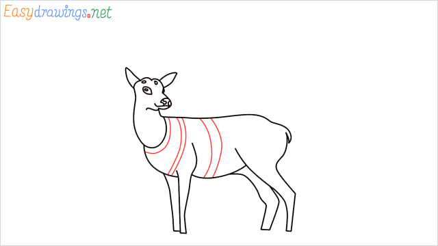 How to draw a Reindeer step (11)