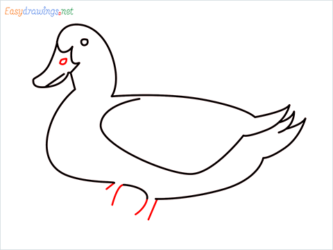 duck drawing for kids step (8)