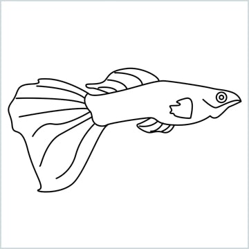 guppy fish COLORING PAGE