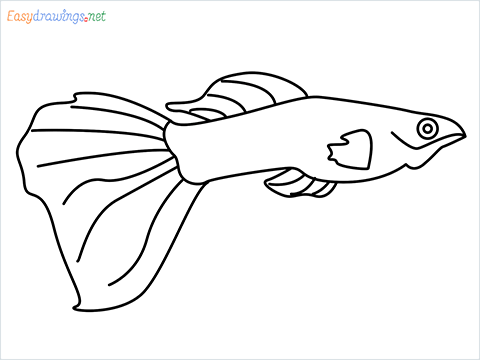 how to draw a guppy fish step by step for beginners